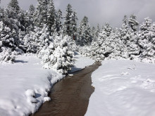Water flows in the creek, but snow covers the ground and trees in the background.