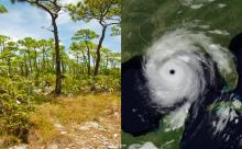 Open stand of Pinus elliottii var. densa   Hurricane Katrina before landfall