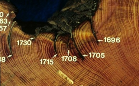 Scars left by past forest fires dated by tree rings