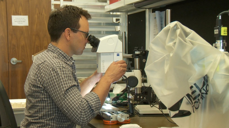 examining tree-ring samples under the microscope