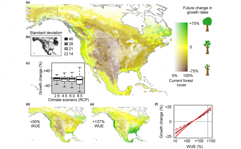 Maps of changes in tree growth rates in North America under changing climate and various water use efficiency assumptions.