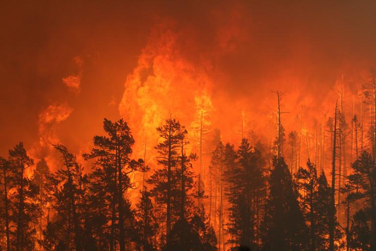 Extreme fire behavior between Nutrioso and Alpine