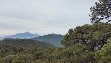 Volcano and pine tree.